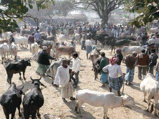 भारत-बांगलादेश सीमेपासून २० कि.मी. अंतरापर्यंत पशूधनाचा एकहीबाजार भरू देऊ नका ! – सर्वोच्च न्यायालय